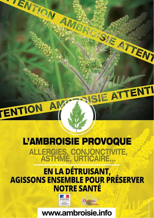 ARS ambroisie affiche